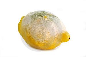El limón para limpiar malas vibraciones...  (5/5)