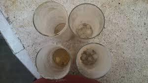 Protección con vaso de vinagre con sal... (3/4)